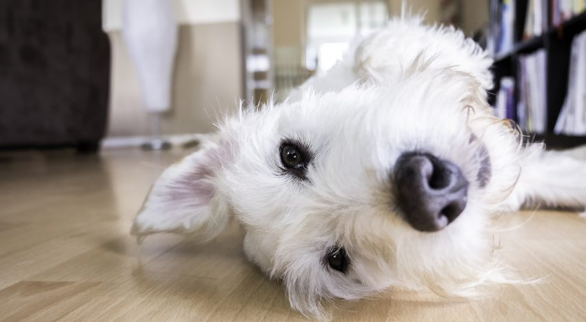 How to Keep Your House Perfect With Pets