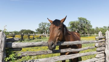 Stop Horsing Around: How To Protect The Profits Of Your Ranch Business