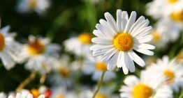 Flowers That Make Great Beauty Ingredients and Tops to Grow Them
