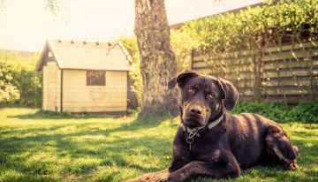 DIY Tips for a Pet – Friendly Garden