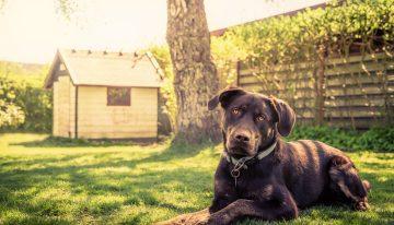 DIY Tips for a Pet – Friendly Garden
