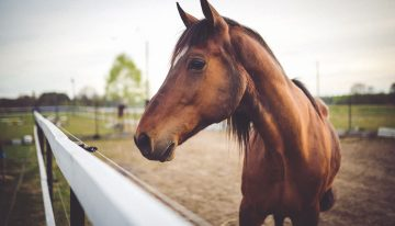 How To Make Your Horse Business More Profitable