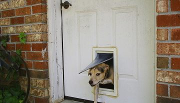 Three Advantages of Having a Pet Door for Your Dog