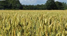 A Vast Landscape: Is Farming A Viable Career Option?