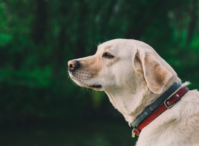 A Man's Best Friend: Discover 5 of The Most Popular Dog Breeds of Today