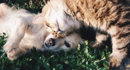 5 Extraordinary Tips To Help Your Cat and Dog Get Along