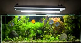 5 Must-Have Fish & Aquarium Supplies