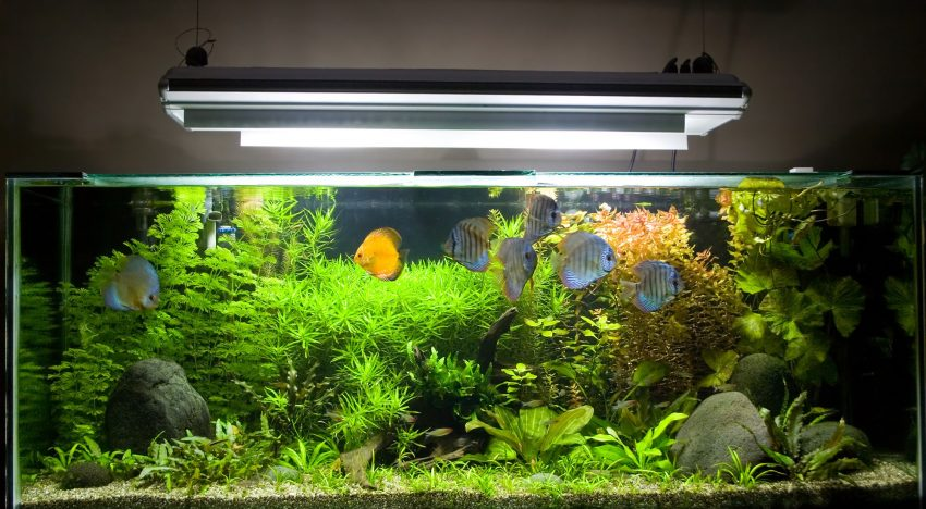 5 Must-Have Fish & Aquarium Supplies