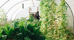 7 Amazing Benefits of Growing a Vegetable Garden