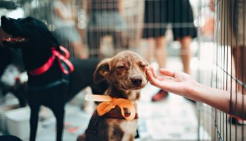 7 Perfect Jobs for Dog Lovers